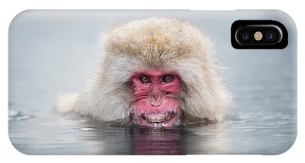 Adapted iPhone Case - Japanese Macaque In A Hot Spring by Dr P. Marazzi