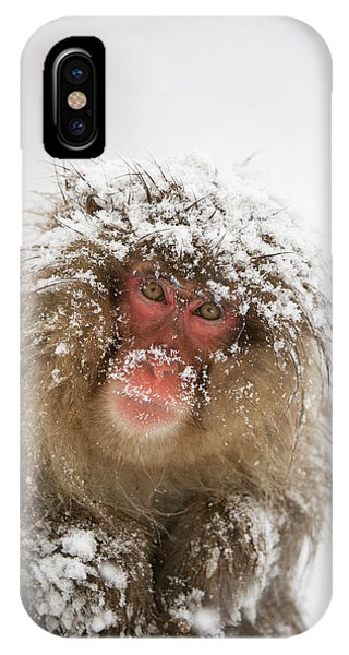 Adapted iPhone Case - Japanese Macaque In The Snow by Dr P. Marazzi