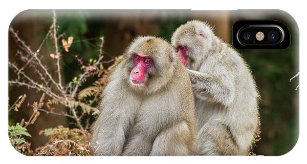Adapted iPhone Case - Japanese Macaque (macaca Fuscata) by Photostock-israel
