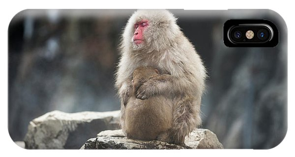 Japanese Macaque With Young Phone Case by Dr P. Marazzi