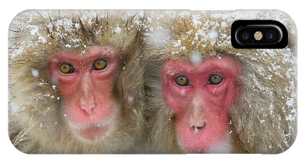 Adapted iPhone Case - Japanese Macaques by Dr P. Marazzi