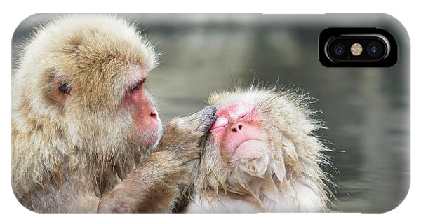 Adapted iPhone Case - Japanese Macaques Grooming by Dr P. Marazzi