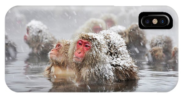 Adapted iPhone Case - Japanese Macaques In A Hot Spring by Dr P. Marazzi