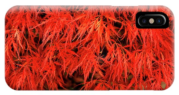 Japanese Maple 'dissectum Nigrum' Phone Case by Andrew Ackerley/science Photo Library