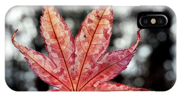 Japanese Maple Leaf - 2 IPhone Case