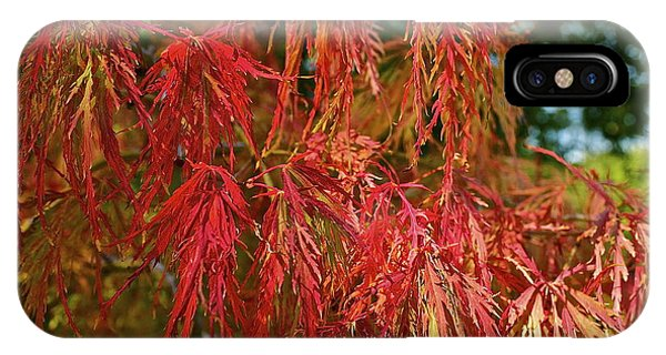 Japanese Maple IPhone Case