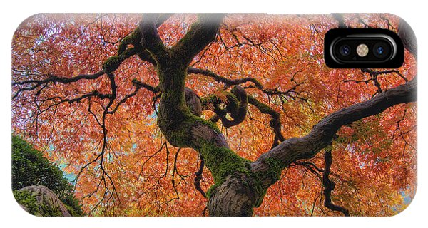 Japanese Maple Tree In Fall IPhone Case