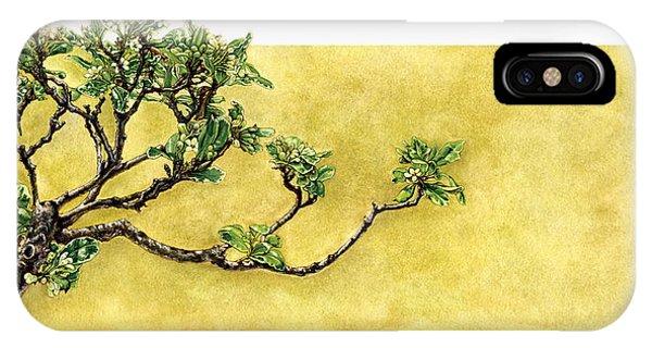 Japanese Pittosporum At The Hakone Gardens Phone Case by Suzannah Alexander