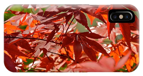 Japanese Red Leaf Maple IPhone Case