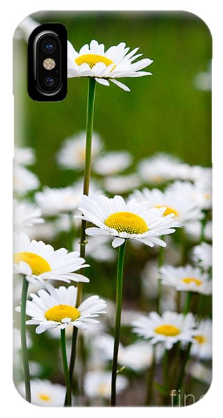 Jasper - Oxeye Daisy Wildflower 2 IPhone Case