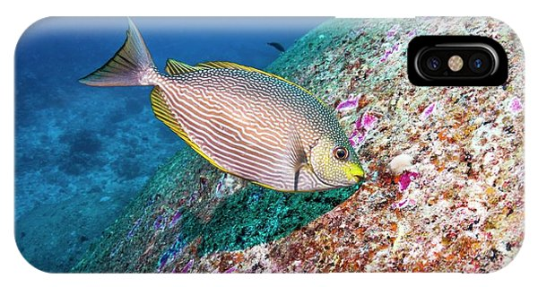 Java Rabbitfish Grazing On Algae Phone Case by Georgette Douwma/science Photo Library