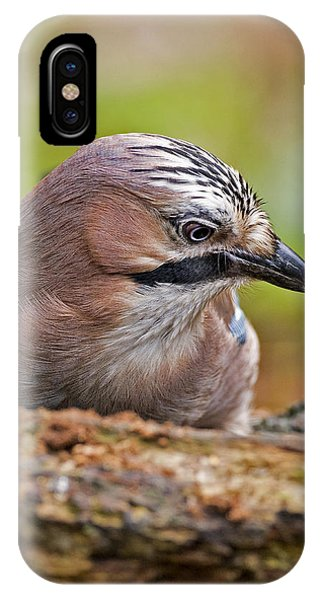 Jay Headstudy  IPhone Case