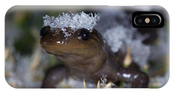 Jefferson Salamander Phone Case by Brian Magnier