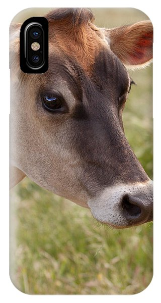 Jersey Cow Portrait IPhone Case