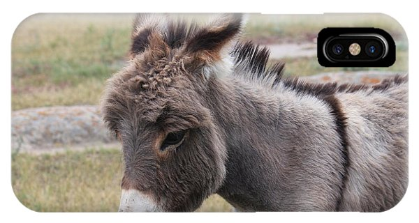 Jerusalem Donkey IPhone Case
