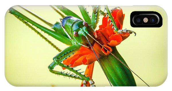 Jiminy Cricket Phone Case by Wally Taylor