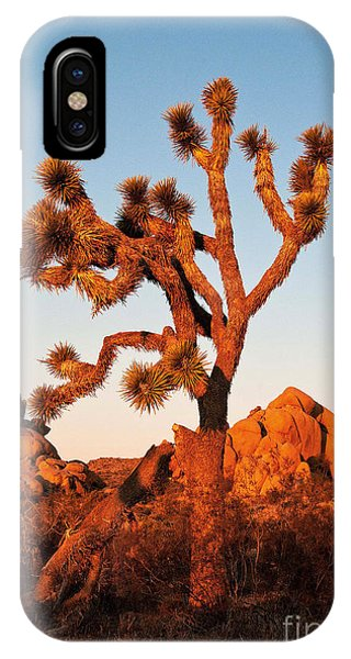 IPhone Case featuring the photograph Joshua Tree At Sunset by Mae Wertz