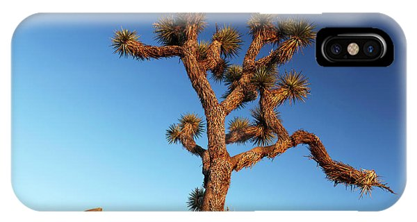 Adapted iPhone Case - Joshua Tree (yucca Brevifolia) by Michael Szoenyi