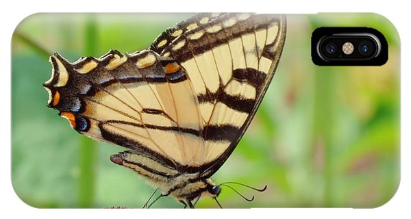 July Swallowtail IPhone Case