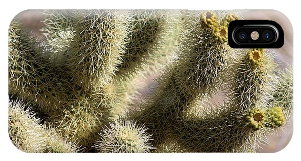 Teddy Bear Cholla iPhone Case - Jumping Cholla Cactus #2 by G Berry