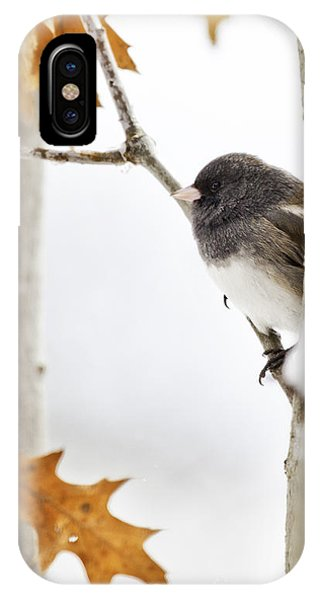 Junco And Oak IPhone Case