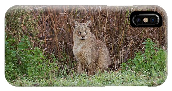 Psi iPhone Case - Jungle Cat (felis Chaus) In The Wild by Photostock-israel