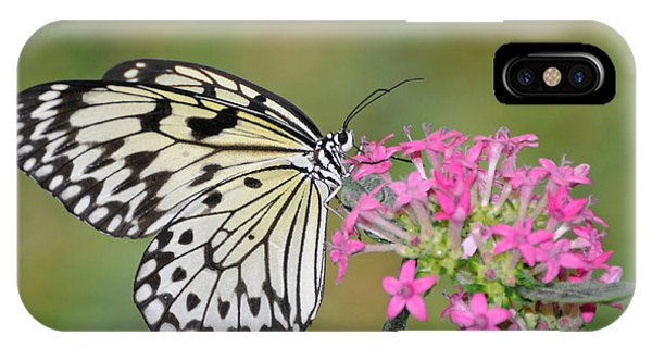 Just A Sip - White Tree Nymph IPhone Case