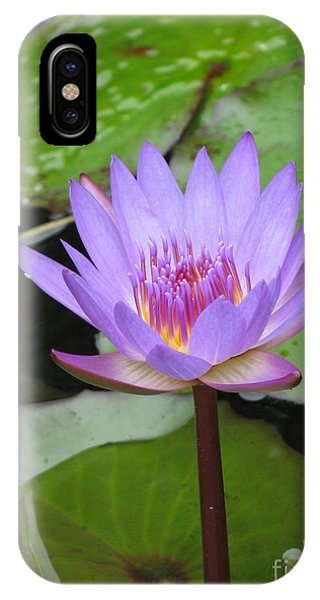 Just A Water Lily  IPhone Case