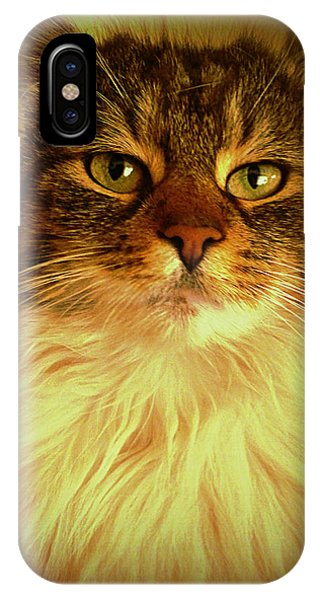 Just Cat IPhone Case