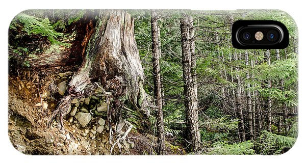 Just Hanging On Old Growth Forest Stump IPhone Case