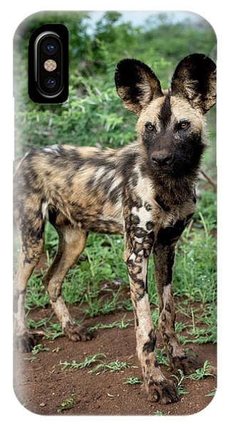 Juvenile African Hunting Dog Phone Case by Tony Camacho/science Photo Library