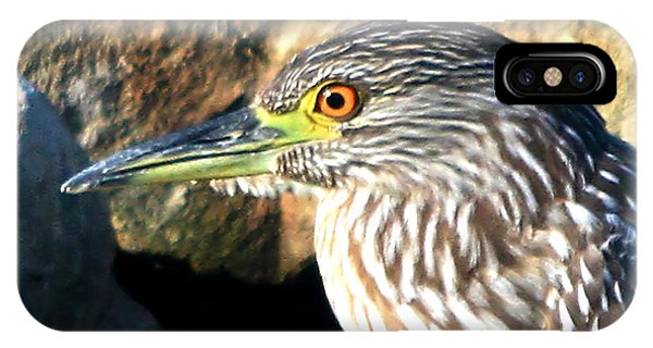 Juvenile Black Crowned Night Heron IPhone Case