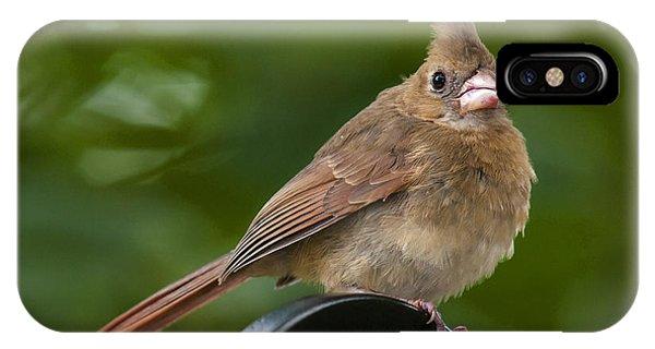 Juvenile Cardinal IPhone Case
