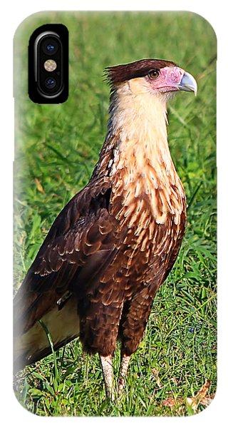 Juvenile Crested Caracara IPhone Case