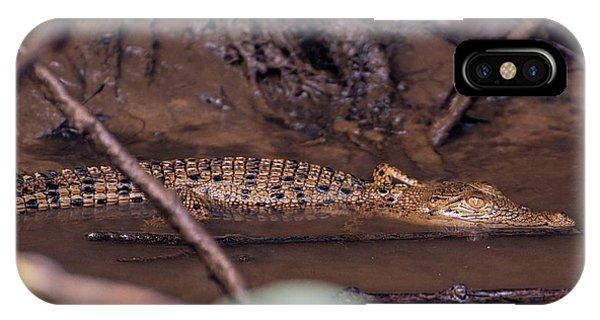 Crocodile iPhone Case - Juvenile Crocodile by Martin Rietze