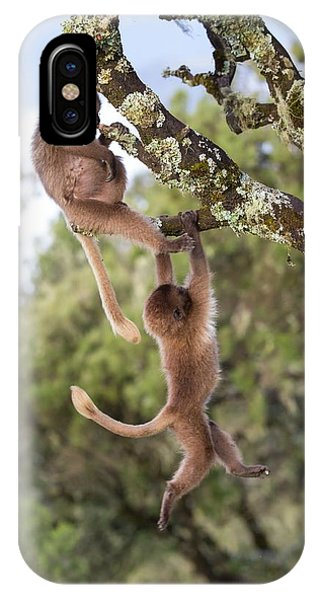 Juvenile Gelada Baboons At Play Phone Case by Peter J. Raymond
