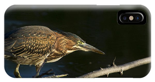 Juvenile Green Heron IPhone Case