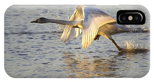 Juvenile Whooper Swan Taking Off IPhone Case