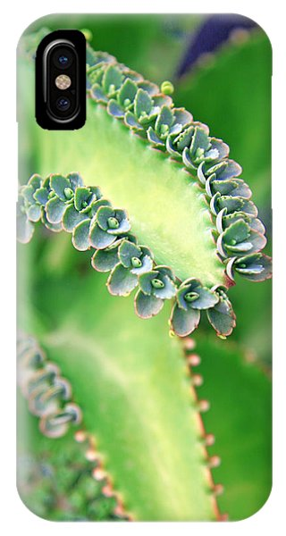 Kalanchoe IPhone Case