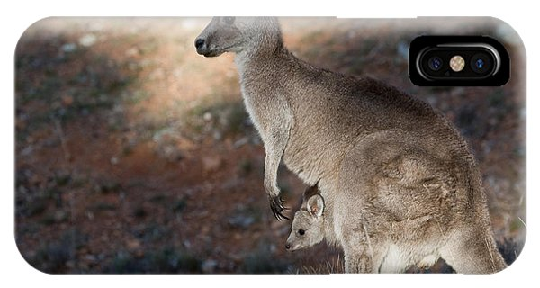 Canberra iPhone Case - Kangaroo And Joey by Steven Ralser