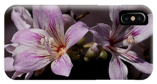 Kapok Bloom IPhone Case