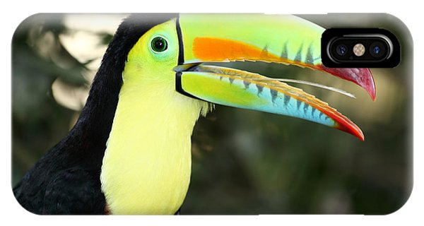 Keel Billed Toucan IPhone Case