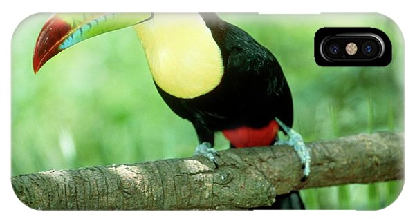 iPhone Case - Keel-billed Toucan (ramphastos Sulfuratus) In Tree by William Ervin/science Photo Library