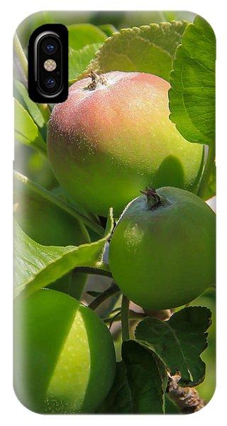Kelowna Apples II Phone Case by Marie  Cardona
