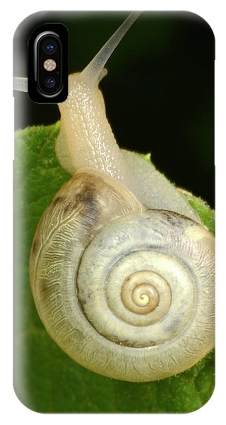 Behaviour iPhone Case - Kentish Snail by Nigel Downer