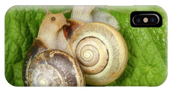 Behaviour iPhone Case - Kentish Snails by Nigel Downer