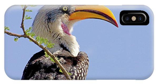 Kenya Profile Of Yellow-billed Hornbill IPhone Case