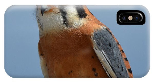 Kestral Close Up IPhone Case