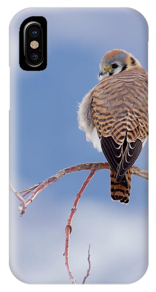 Kestrel In The Cold IPhone Case