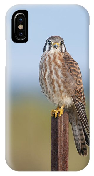 Kestrel On Metal Post IPhone Case